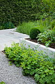 DESIGN: Charlotte ROWE, LONDON. SMALL CONTEMPORARY Garden IN JUNE with RAISED RENDERED BORDER AND ALCHEMILLA MOLLIS SPILLING ONTO GRAVEL PATH
