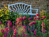 PETTIFERS, OXFORDSHIRE: DAWN Light HITS A BORDER with ALLIUM FIRMAMENT, STIPA TENUISSIMA, GLADIOLUS COMMUNIS BYZANTINUS with Blue SEAT Behind