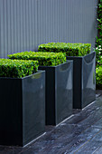 TANIA LAURIE, LONDON. SMALL CONTEMPORARY Garden by Charlotte ROWE. Black Metal SQUARE Planters with Box (BUXUS SEMPERVIRENS) On Black DECK AGAINST Grey PAINTED FENCE