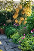 SANDHILL Farm HOUSE, Hampshire - Designer Rosemary Alexander: BORDER Beside PATH with Box BALLS, STIPA GIGANTEA, ALCHEMILLA MOLLIS AND Rosa Gallica 'VERSICOLOR'