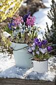 Emaille - Gefäße mit Fruehlingsblühern im Schnee