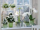 Weißes Winter - Fenster