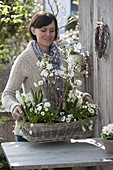Frau bepflanzt Korb mit weißen Frühlingsblühern