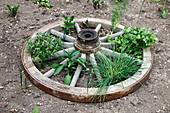 Liegendes Wagenrad mit Kräutern und Gemüse bepflanzt