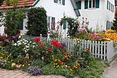 Ländlicher Vorgarten mit Sommerblumen und Rosen