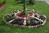 Staffler : Baumscheibe als Kräuter - Rad bepflanzt, getrennt mit Granitsteinen, Mitte mit rotem Dekomulch gemulcht
