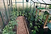 Gewächshaus mit Gemüse, Topftisch mit Aussaatschale, Beete mit Holzeinfassung, Weg mit Rindenmulch