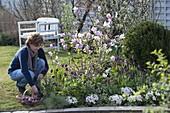 Frühlingsbeet mit Magnolie