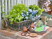 Kräuterkorb und eßbare Blüten im Frühling