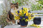 Blau-gelber Frühlingsstrauß mit Forsythia (Goldglöckchen)
