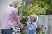 Junge schenkt seiner Mutter einen Topf mit Rosa (Rosen)