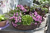 Eßbarer Frühlingskranz : Primula 'Romance' (Gefüllte Primeln)