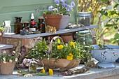 Korb mit frisch geernteten Frühlings-Wildkräutern