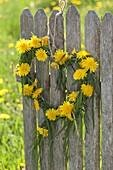 Herz aus Gräsern und Taraxacum (Löwenzahn) an Zaun gehängt