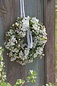 Weißer Kranz aus Apfelblüten (Malus)