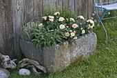 Granit-Trog bepflanzt mit Rosa (Rosen), Salbei (Salvia), Thymian (Thymus)