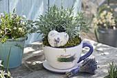 Lavendel (Lavandula) in großer Lavendeltasse mit Lavendelherz aus Keramik
