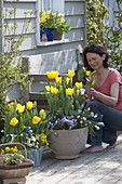 Frühlingsterrasse mit Tulipa 'Yellow Flight' (Tulpen), Muscari 'Magic Mix'