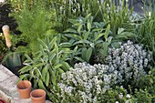 Hochbeet aus alten Ziegelsteinen mit Kräutern bepflanzt