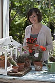 Frau pflegt kleines Kakteenhaus mit Echinocereus scheeri (Igelsäulenkaktus)