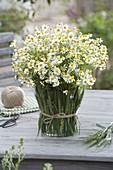 Strauß aus Kamille (Matricaria chamomilla) in Vase verkleidet mit Hordeum