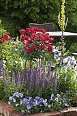 Rosen und Ziersalbei in Beet mit Klinkereinfassung