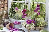 Kräuter und Blüten im alten Gewächshaus trocknen