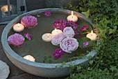Schwimmende Blüten von Rosa (Rosen) und Schwimmkerzen