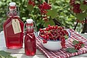 Schälchen mit frisch gepflueckten roten Johannisbeeren (Ribes rubrum)