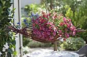 Calibrachoa Superbells 'Cherry Star' (Zauberglöckchen) und Anagallis