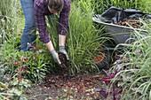 Gräser mit Rindenmulch mulchen
