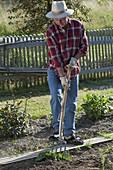 Mann gräbt Pflanze mit Grabgabel aus