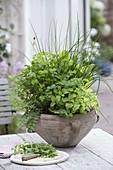 Kraeuterschale mit Schnittlauch (Allium schoenoprasum), Zitronenmelisse