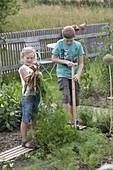 Mädchen und Junge ernten Möhren , Karotten (Daucus carota)