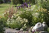 Beet mit Echinacea purpurea 'Avalanche' weiss , 'Meringue' weiss gefüllt