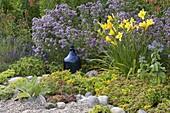 Kiesbeet mit Sedum floriferum 'Weihenstephaner Gold'