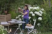 Hydrangea arborescens 'Annabelle' (Strauch - Hortensie), Heuchera