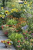 Buntes Sommerbeet mit Helianthus (Sonnenblumen), Helenium (Sonnenbraut