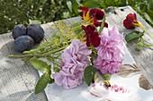 Rosa 'Salet' (Moosrose), Tropaeolum (Kapuzinerkresse), Fenchel