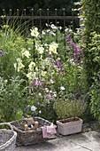 Duft - Beet im kleinen Garten