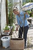 Weiden - Rankgerüst für Kletterpflanzen selbermachen