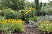 Bauerngarten mit Stauden und Sommerblumen bepflanzen