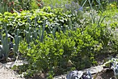Mischkultur im Biogarten