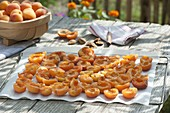 Aprikosen trocknen : aufgeschnittene, entkernte , halbierte Aprikosen