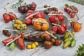 Tomaten - Tableau aus verschiedenen Farben und Formen