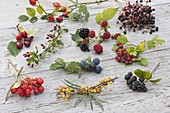 Wildfrüchte - Tableau