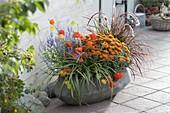 Graue Schale herbstlich bepflanzen