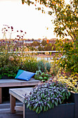 Designer: Charlotte ROWE, London: ROOF Garden - A PLACE TO SIT - DECKED SEATING AREA with Blue CUSHIONS AND HERBS. AMELANCHIER AND Verbena BONARIENSIS, SAGE
