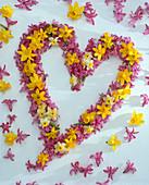 Herz aus Blüten von Narcissus (Narzissen) und Hyacinthus (Hyazinthen)