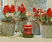 Tulipa / Minitulpen dekoriert mit Heu und
